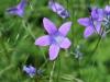 Blommor i Åmot